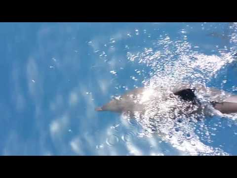 Dolphins near Potokaki, Samos Island, Greece