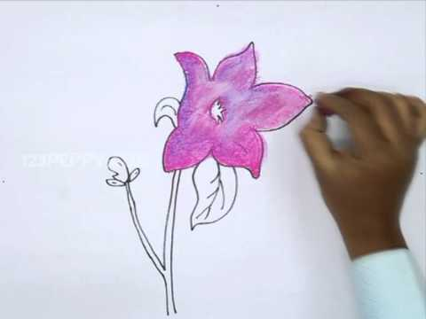 How To Draw A Chinese Bell Flower Youtube