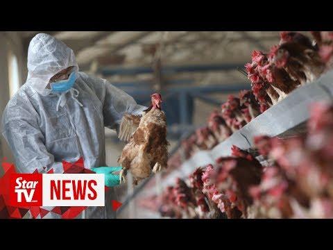 China reports bird flu outbreak in Hunan province