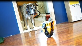 Claptrap terrorizes my dog