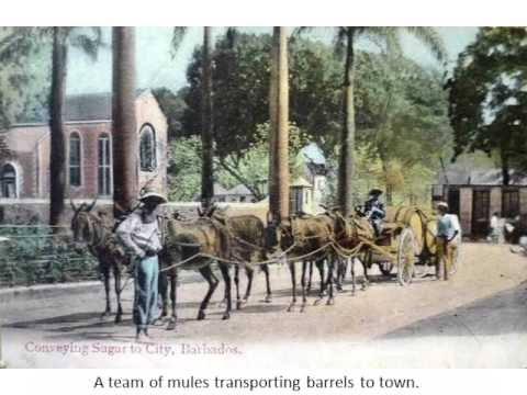 Old Barbados - Transportation
