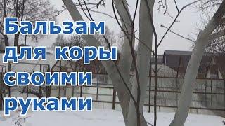 видео Побелка деревьев весной