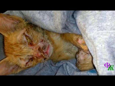 Умирающего котенка шарахались как чумы и обходили стороной. Но нашелся тот, кто поверил в него