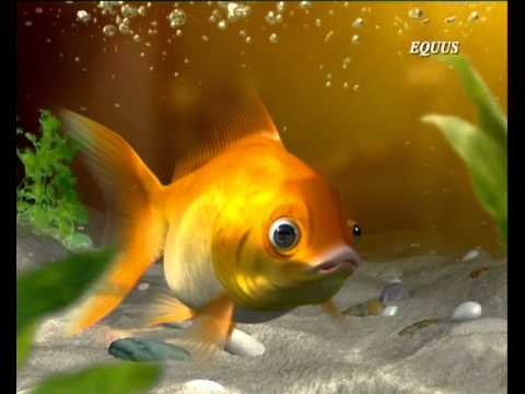 J & J Band-aid Gold Fish