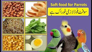 soft food for parrot   cockatiel soft food   love bird soft food   bywaseem screenshot 5