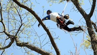 Tree Removal Severna Park, MD | Tree Service Severna Park, MD | Nationwide Tree Discount Service