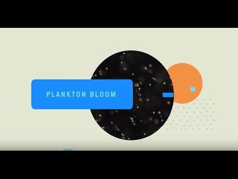 Phytoplankton bloom / AO