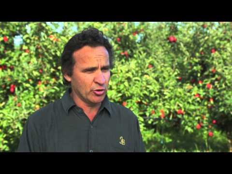 Bostock New Zealand Organic Apple Orchards