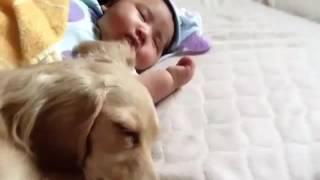 犬と赤ちゃん.