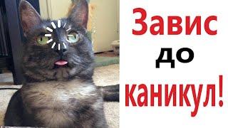 Лютые приколы ЗАВИС ДО КАНИКУЛ САМОЕ смешное видео Засмеялся проиграл Domi Show