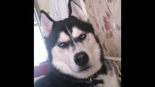 TRY NOT TO LAUGH-Cute PETS & Funny ANIMALS | Funny Videos 2018