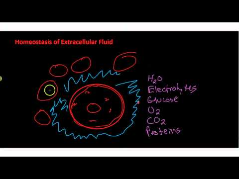 Homeostasis of Extracellar Fluid