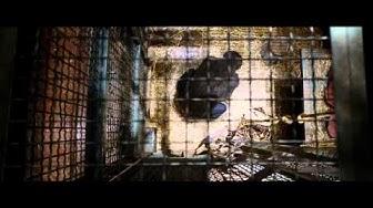 Apinoiden planeetan synty - Trailer - FS Film (2011) [HD] [720p]