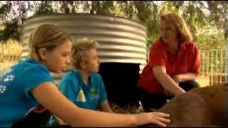 Serendipity Farm Qld - All About Animals Tv Show