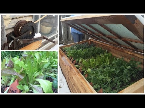 My Mom's AWESOME Cold Frame!