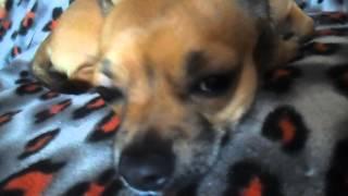 Что нужно для щенка в вашем доме?