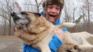 UPDATE ON SHEBA *my dog*