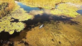 ВОТ ЭТО РЫБАЛКА НА КАРАСЯ, ОЧЕНЬ МНОГО РЫБЫ! Сказочные родные просторы. Рыбалка на крупного карася