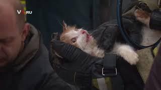 """Спасение кошки после пожара - вернули с """"того света"""""""