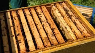 Як підняти бджіл в надставку. ( 06.06.2018р.)