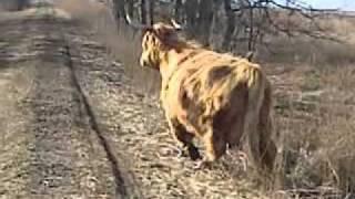dziki zwierz za pobliskim gajem ruczajem