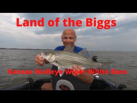 Land Of The Biggs - Kansas Fishing Walleye, Wiper And White Bass