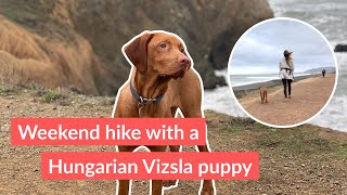 Hiking with our Hungarian Vizsla puppy •Vlog 6