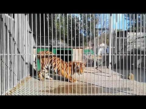 Алтайчик задыхается в тюрьме