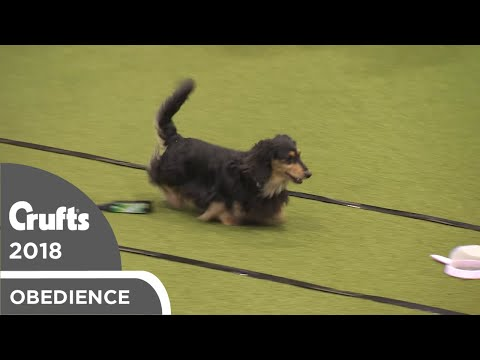 Obreedience - Dachtastic | Crufts 2018