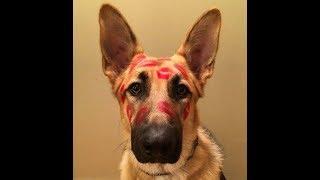 Собака-это ЛЮБОВЬ!Моя коллекция любимых картинок)