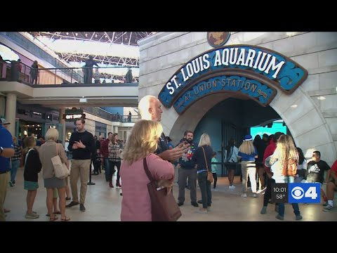 Locals Flock To St. Louis Aquarium At Union Station On Christmas Day