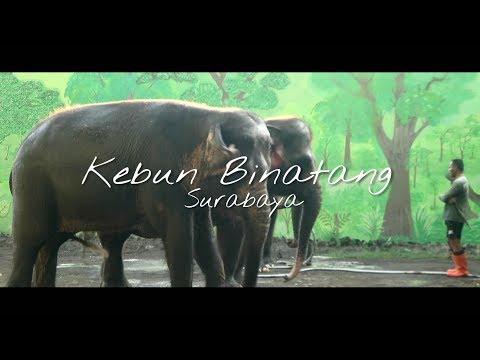 Kebun Binatang Surabaya - Cinematic Video