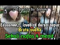 Brata Yudha Dewi Sinta Lovebird Durasi Sepur  Menit Sekali Ngekek Argosuro Team  Mp3 - Mp4 Download