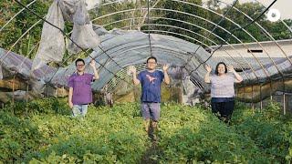 Meet Singapore's Veggie Farming Family