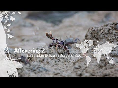 Project Mangrove: Een stukje Belize in Burgers' Zoo Aflevering 2