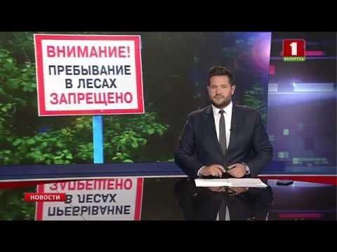 Во всех областях Беларуси введен запрет на посещение лесов
