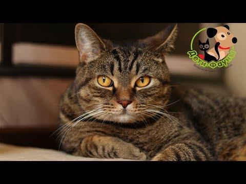 Вопрос: Почему кот отказывается выходить на улицу?