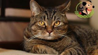 Стоит ли выпускать кошку на улицу? Самовыгул кошки