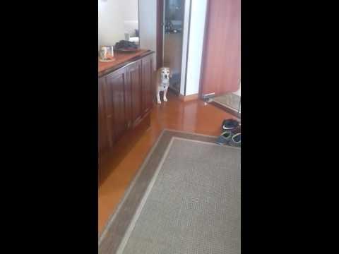 Perro arrepentido pide disculpas