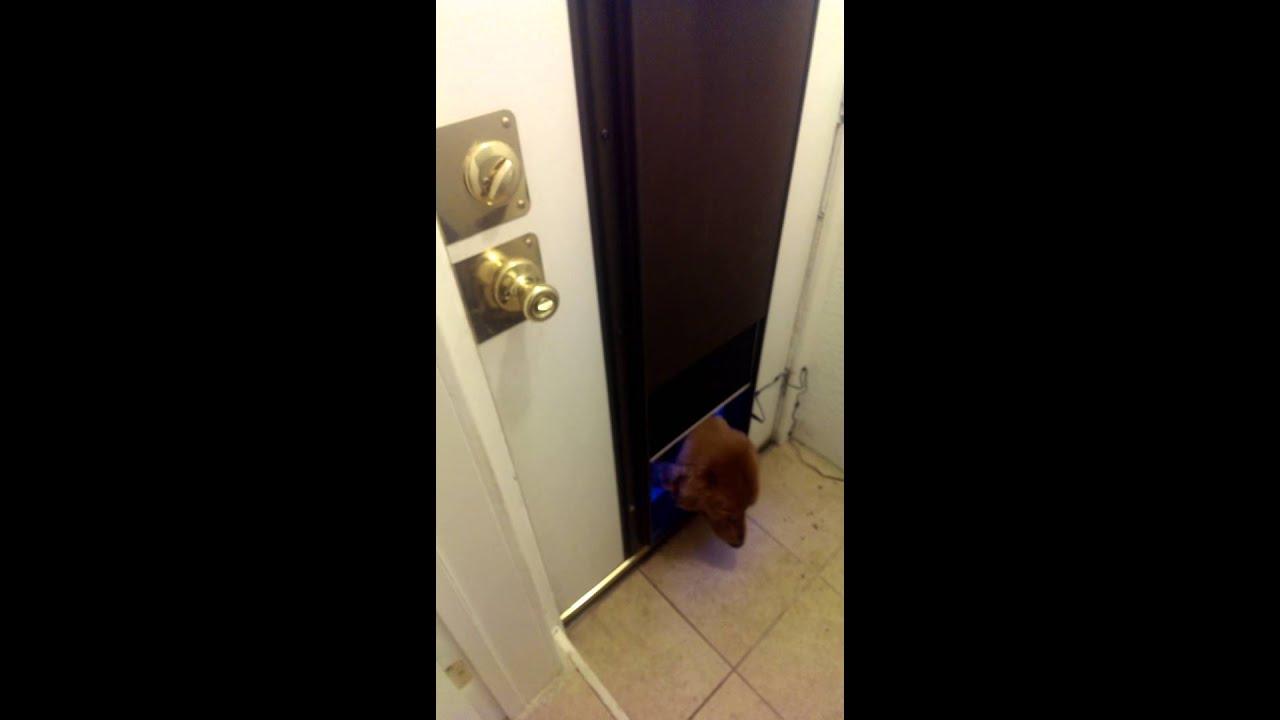 Plexidor Electronic Pet Door Youtube