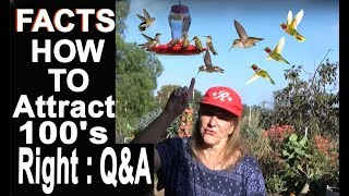 EASY Hummingbird Recipe for Healthy Birds with Questions and Answers
