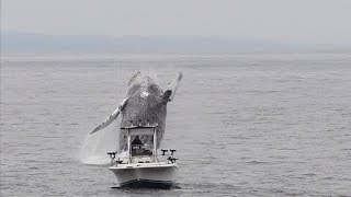 Kate Cummings | Whale Breach Close To Boat