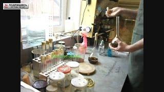 Вешенка мицелий, жидкая питательная среда, состав и приготовление