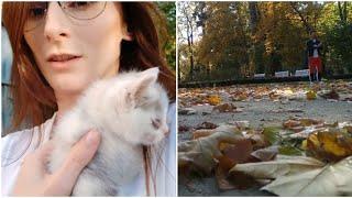 Chłopak wywiózł mnie do lasu/Ratuje dwa małe koty