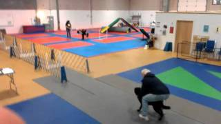 Cute Big Dog Little Dog Flyball Class