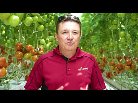 Introducing OntarioRed™ Tomatoes from NatureFresh™ Farms