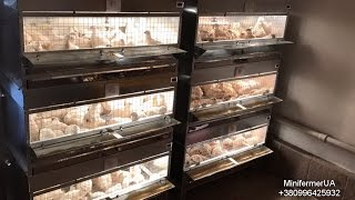 Брудер для цыплят своими руками: чертежи, размеры, клетки для перепелов, бройлеров, индюшат, как сделать ясли, видео