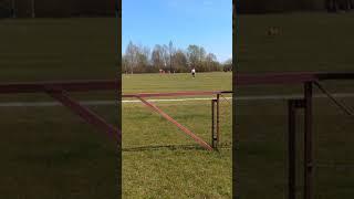 Pies na boisku podczas meczu Taranta