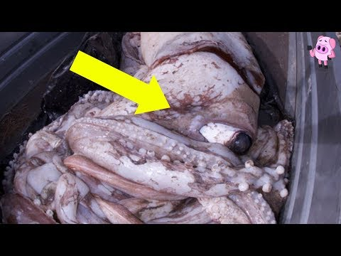 10 Weirdest Things Found Washed Ashore
