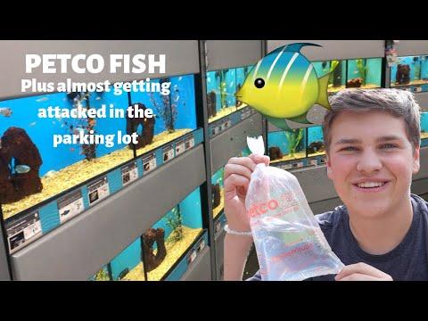 FISH SHOPPING AT PETCO